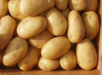 Parduodu Valgomąsias ir Pašarines Bulves
